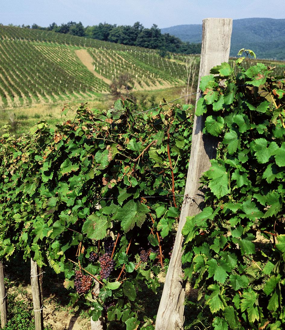 Vineyard micro-location