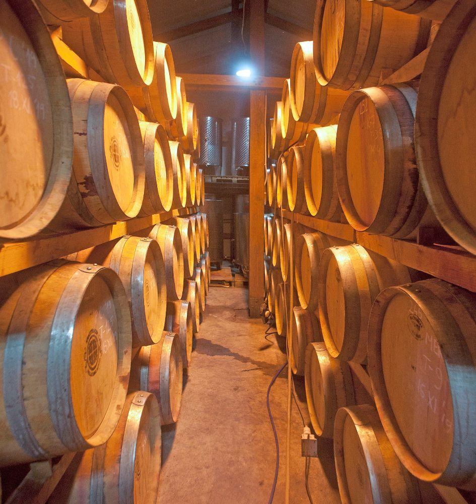 Vinarstvo i podrumarstvo