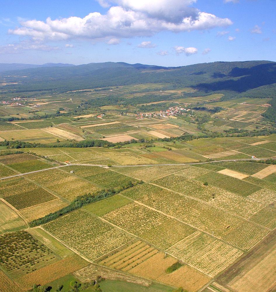 Položaji i sorte vinove loze